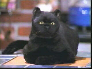 Salem, the talking cat